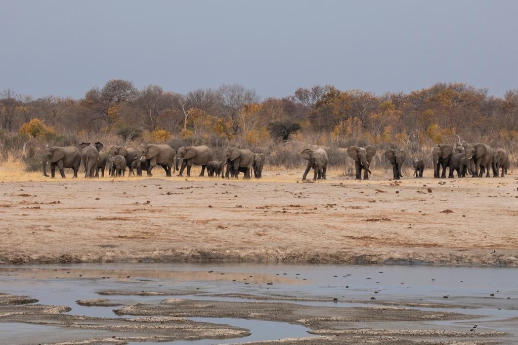 Zimbabwe to sell hunting rights for endangered elephants.